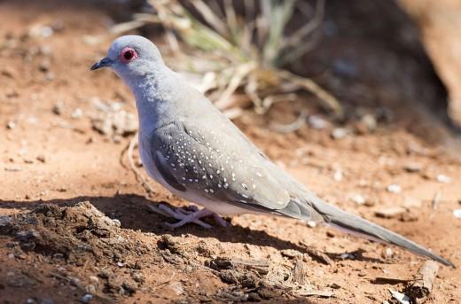 Diamond Dove By Jim Bendon CC BY-SA 2.0