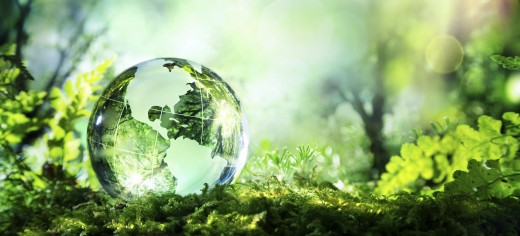 Environmental, Ecological, and Conservation Issues