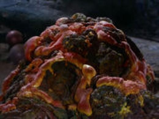 Pergium-slurping rock creature