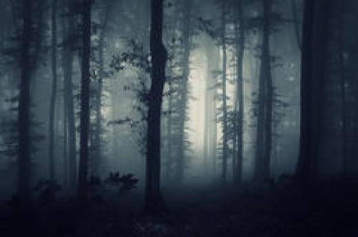 The Dark Secret of the Woods