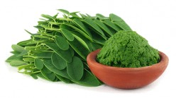 10 Health Benefits Of Moringa Oleifera You Weren't Aware Of