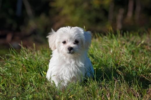 Feeling Love and Loyalty of a Dog May Prolong Life