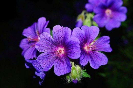 I Am Mystified by the Beauty of Flowers and They Instantly Put Me into a State of Mind similar to My Meditation  -  Author