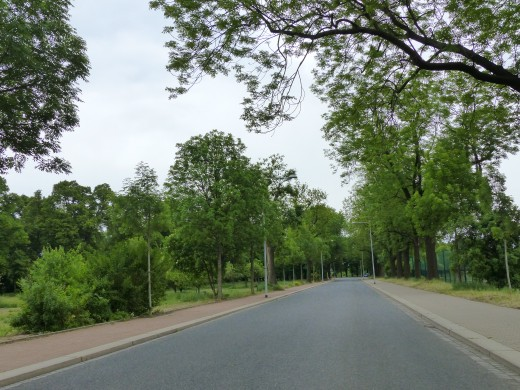 Highway lined with trees.