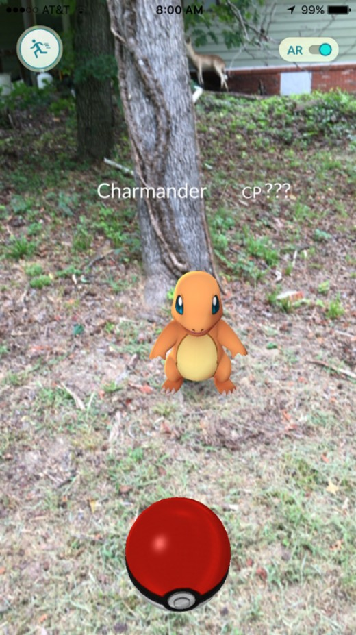 A Charmander apparently lives in my backyard.