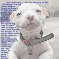 Pit Bulls Are Individuals and Not a Breed