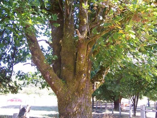 Sheila's favorite tree