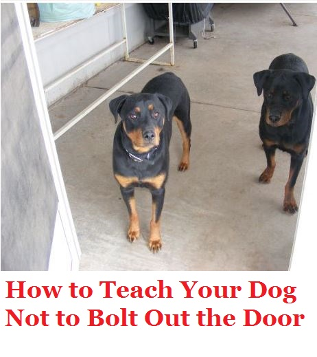 How To Stop Your Dog From Bolting Out The Door Pethelpful