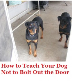 How to Stop Your Dog From Bolting Out the Door