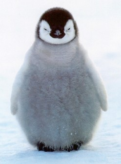 Penguins Are NOT Cute: Here's Why