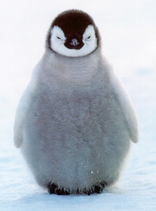 This smug penguin face says it all.
