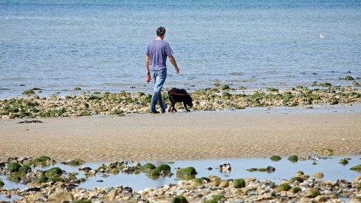 Man and dog taking their daily walk.