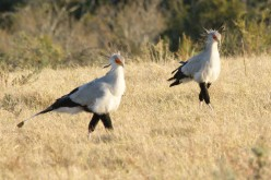 Birding in the Eastern Cape of South Africa