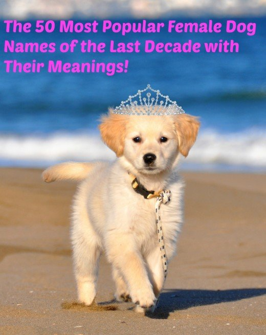 Princess is one of the most popular female dog names.