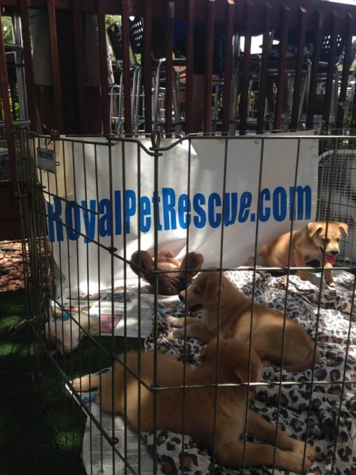 "Adorable adoptable puppies at ""Yappy Hour"""