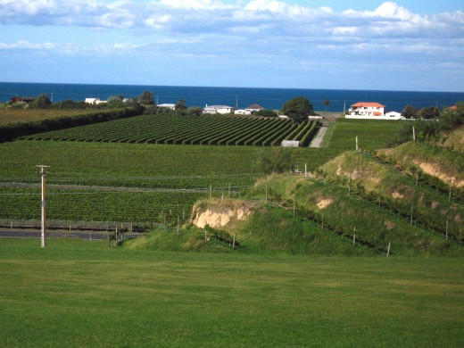 A view of Hawkes Bay from Esk Valley Estate