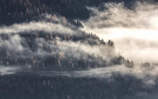 Windy, Foggy Dawn