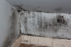 Top 7 Tips for Choosing the Best Mold Remediation Company