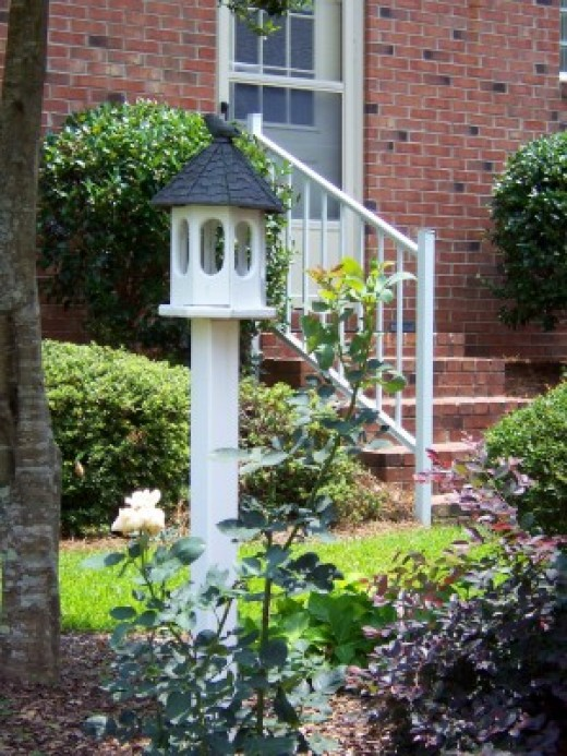 Create a bird friendly yard!
