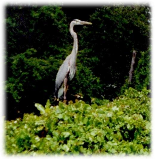 I prefer the solitude of the noisy swamp...heh-heh...