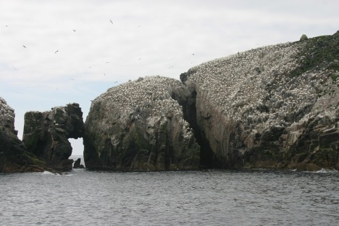 The largest colony of birds I've ever seen!  Literally 1000s of gannets at Flannan Isle.