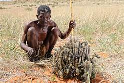 The major selling point was that the Bushmen of Southern Africa used Hoodia to suppress their appetite while they went on hunts for several days.