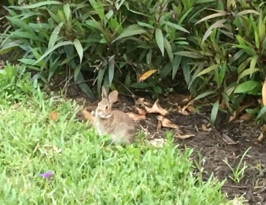 surprise visit from a bunny