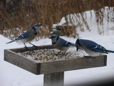 Some birds prefer a flat feeder
