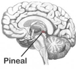 The Pineal Gland, the Third Eye and the Christain