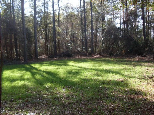 Small foodplot in a logging landing