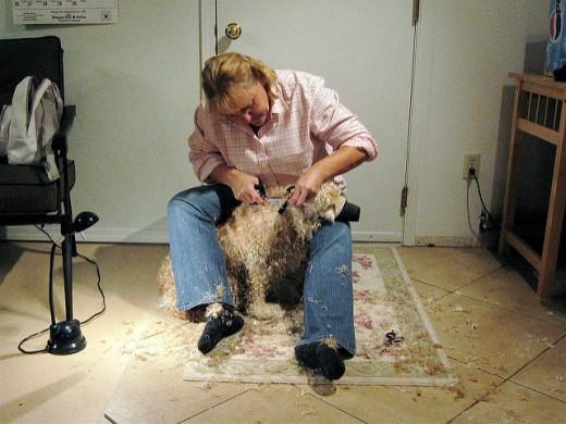 Doggie having a fur cut