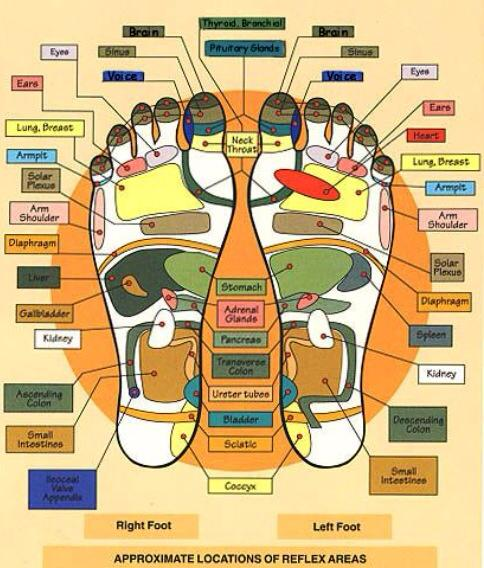Reflexology map