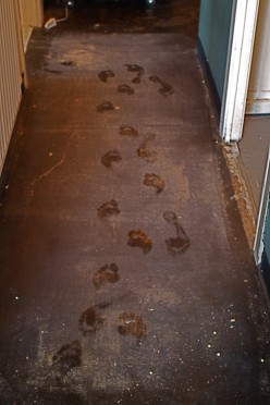 Footprints in the newlywed couple's dwelling is a good way to create stress