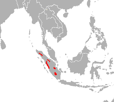 The scattered population of the Sumatran Tiger.