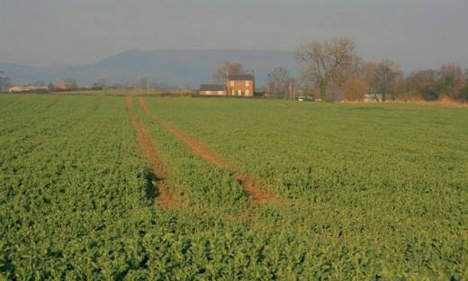A school farm.
