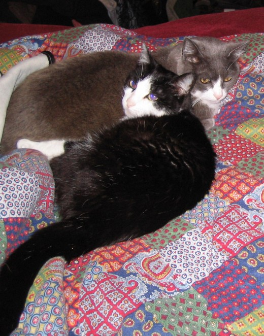 Penny, foreground (RIP July 2008)and sister Pattycat.