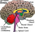 How Memory Promotes Addiction
