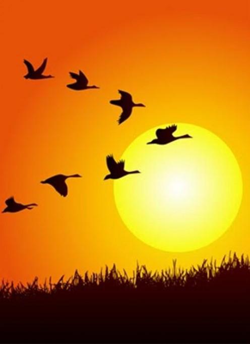 Instinctive Harmony in the V Formation of Birds