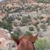 SaddleScamp profile image