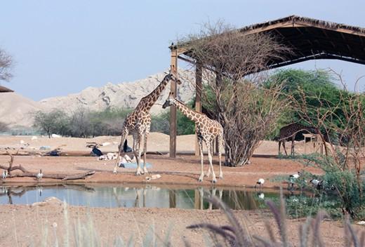 Al-Ain Wildlife Park