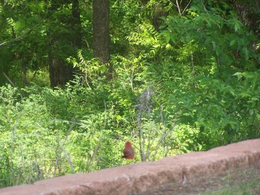 The birds of Summer...