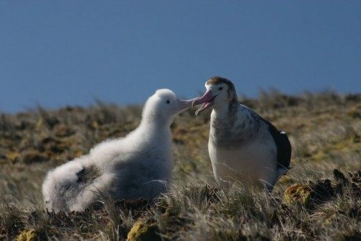 Amsterdam Albatross By Vincent Legendre GNU 1.2