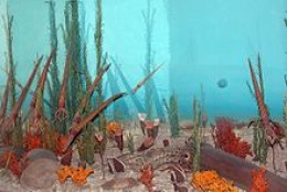 Ordovician Sea Life