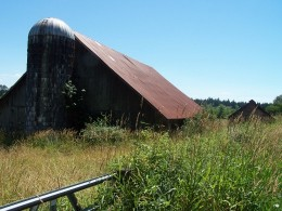 The crumbling old barn made a good shelter for the families of feral cats.