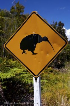 Bumble Town - NZ: Secret Ram Signs: Off The Beaten Track With Huge Kiwi Sheep.