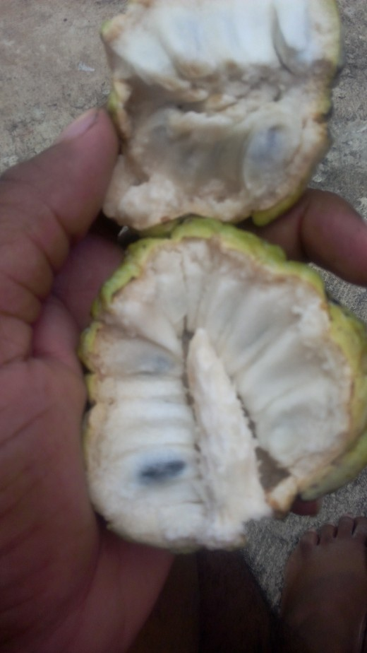 Inside a Sweet Sop a.k.a Sugar Apple