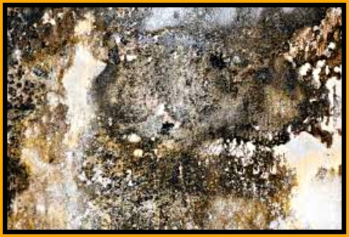 Black mold grows in dark, damp areas, is toxic, smells terrible and is very difficult to get rid of.