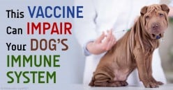 Rabies vaccine for animals in Brazil