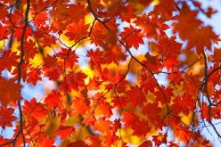 Autumnal Leaves. A Sonnet, to  Rasma Raisters (Gypsy Rose Lee)