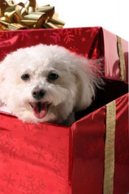 Dogs do NOT make good gifts!